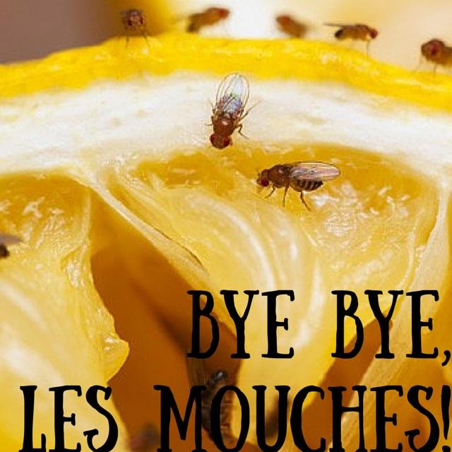 Comment se d barrasser des maudites mouches fruits naturellement le blog de jule - Comment se debarrasser des mouche ...