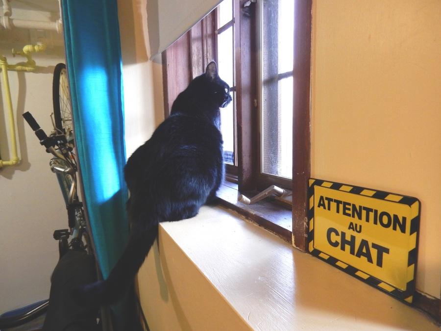 Attention au chat!