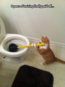 Chat toilette